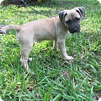 Adopt A Pet :: Zora - Windermere, FL