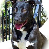 Adopt A Pet :: Jet - Anaheim, CA