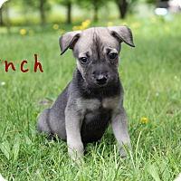 Adopt A Pet :: Lynch - New Oxford, PA