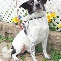 Adopt A Pet :: Riordan - West Chicago, IL