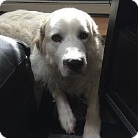 Adopt A Pet :: Rocky - in MA - Lee, MA