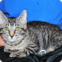Adopt A Pet :: Dana - Parsons, KS