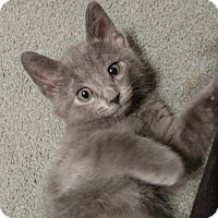 Adopt A Pet :: Dublin - Cincinnati, OH