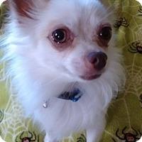 Adopt A Pet :: Toley - Overland Park, KS