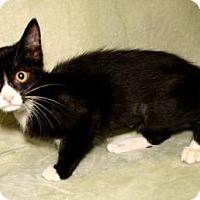 Adopt A Pet :: Go Go - Bradenton, FL