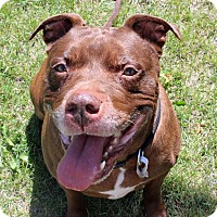 Adopt A Pet :: Moose Wysnooski - Troy, MI
