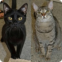 Adopt A Pet :: Ellie & Malcolm - Michigan City, IN