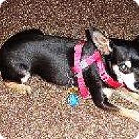 Adopt A Pet :: FABIO - DeLand, FL