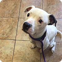 Adopt A Pet :: Action Jackson - Jacksonville, FL