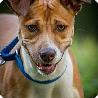Adopt A Pet :: Lovey - Bradenton, FL