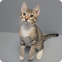 Adopt A Pet :: Obi - Seguin, TX
