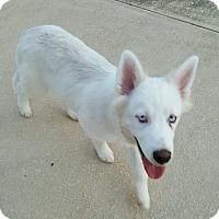 Adopt A Pet :: Asa - Clay, AL