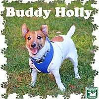 Adopt A Pet :: Buddy Holly - Fallston, MD