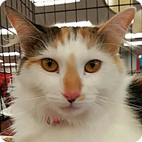 Adopt A Pet :: Angelica - Lyons, IL