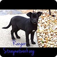 Adopt A Pet :: Ranger - Colmar, PA