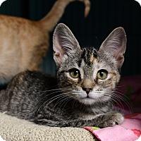 Adopt A Pet :: Fawn - Tomball, TX