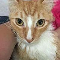 Adopt A Pet :: Buttercup - Sedalia, MO