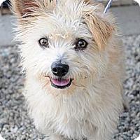 Adopt A Pet :: Scruffy - Acton, CA