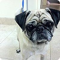 Adopt A Pet :: Lucky - Anaheim, CA