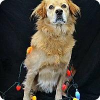 Adopt A Pet :: Butter - Villa Rica, GA