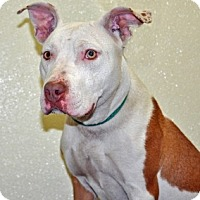 Adopt A Pet :: Coconut - Port Washington, NY