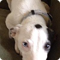 Adopt A Pet :: Jack - River Falls, WI