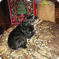 Adopt A Pet :: Lea - Vaudreuil-Dorion, QC