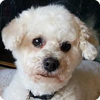 Adopt A Pet :: Quinn - La Costa, CA