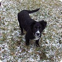 Adopt A Pet :: Radar - Huntsville, TN