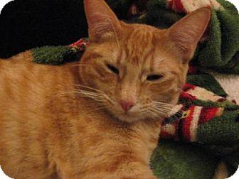 Domestic Shorthair Cat for adoption in Logan, Utah - Honey