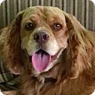 Adopt A Pet :: Hank
