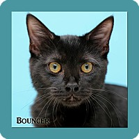 Adopt A Pet :: Bouncer - Aiken, SC