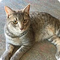 Adopt A Pet :: Dunkin - Topeka, KS
