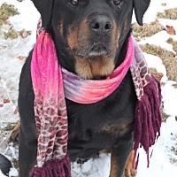 Adopt A Pet :: Akina - Rexford, NY