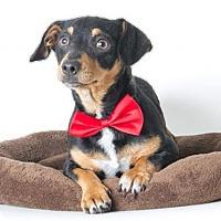 Adopt A Pet :: A677281 - Sacramento, CA