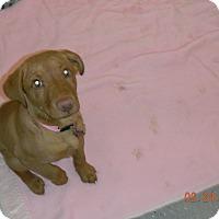 Adopt A Pet :: LADY - Sandusky, OH
