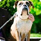 Adopt A Pet :: Shelly (fka Sandy)