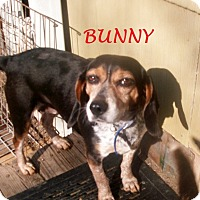 Adopt A Pet :: BUNNY - Ventnor City, NJ