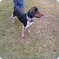 Adopt A Pet :: Rascal - Thomaston, GA