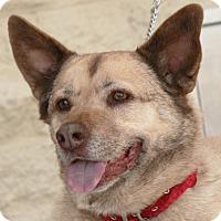 Adopt A Pet :: Sophie - Palmdale, CA