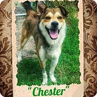 Adopt A Pet :: Chester - Seaford, DE