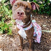 Adopt A Pet :: Raina - Charlotte, NC
