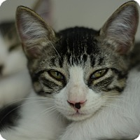 Adopt A Pet :: Biscotti - West Palm Beach, FL