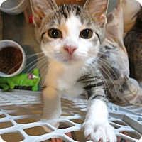 Adopt A Pet :: Kimberly - Geneseo, IL