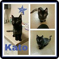 Adopt A Pet :: Kato - Steger, IL