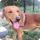 Adopt A Pet :: Tango