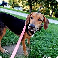 Adopt A Pet :: Tori - Washington, PA