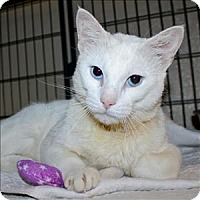 Adopt A Pet :: Frosted Flake - Duluth, MN
