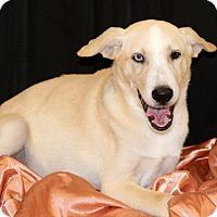 Adopt A Pet :: Achilles~ meet me! - Glastonbury, CT