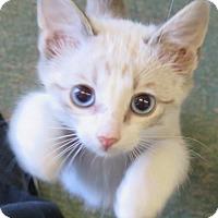Adopt A Pet :: Tomkin - Gonzales, TX